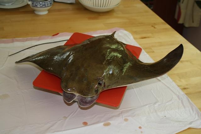 Nj saltwater fishing reports stingray for Nj saltwater fishing report
